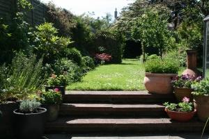 garden June 28 001