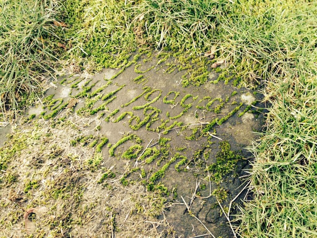 A swirl of moss