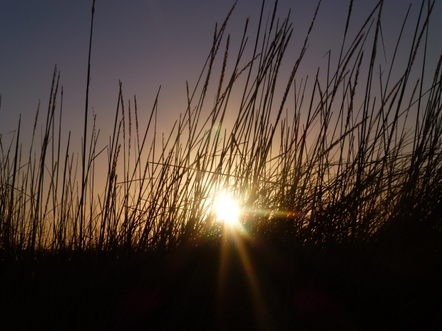 Low winter sun, St Andrews